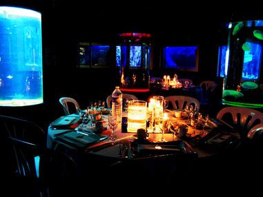 Organisez votre mariage à l'aquarium - Crédit photo : Aquarium de Vannes