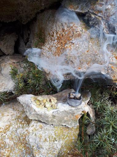 Wacholder Harz Wacholderharz Sammeln Juniperus communis juniper resin incense Räuchern Räucherwerk Räucherung Ritual Naturritual