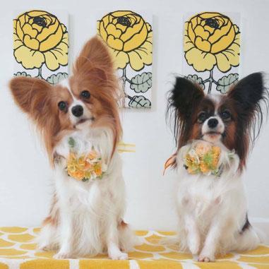 犬連れ ワークショップ 花冠