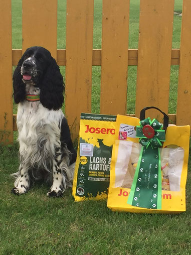 """""""Jolanthe vom Belauer See"""" is placed 2nd at her first Rally Obedience Competition! Photo: Svenja Arendt"""