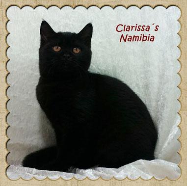 Namibia im Alter von ca. 16 Wochen
