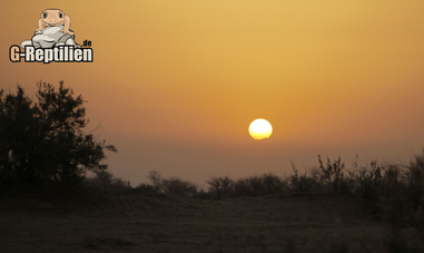 Leopardgecko Lebensraum Habitat Sonne Sonnenuntergang