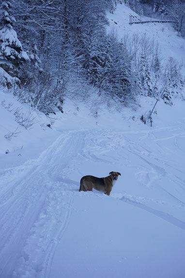 berghundtal,berg-hund-tal,hunde-blog,skitour,kasberg,traunstein,almtal,totes-gebirge,wandern-mit-hund,skitour-mit-hund,skigebiet-kasberg,outdoor-blog,outdoor,testberichte