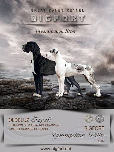 Litter D - Oldbluz Izysk x Bigfort Evangeline Lilly