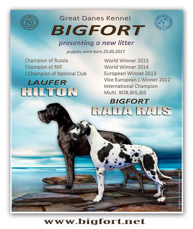 LAUFER HILTON x BIGFORT RADA RAIS