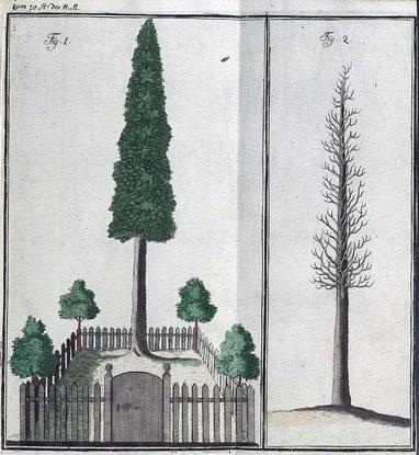 Kolorierter Kupferstich im Hanauischen Magazin (1781)