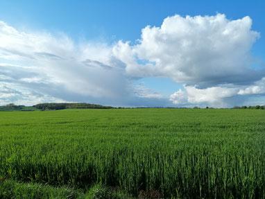 Verkauf von Ackerland mit anschließender Rückpacht, Landimmobilien, Verkauf von Ackerland, kauf von Ackerland