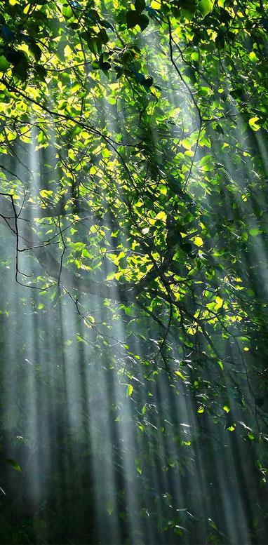 Wald Umwelt