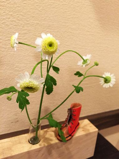 お花:マトリカリア ハーブの一種で、葉の香りは虫たちを忌避させるそうです