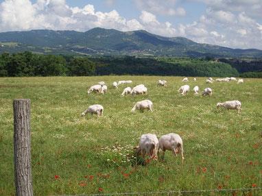 Landschaft am Monte Amiata