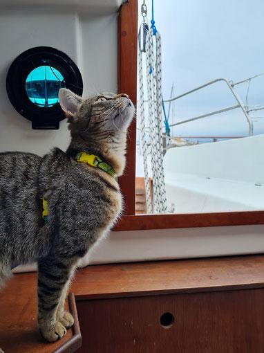 Fibi an Bord - von Furcht keine Spur!