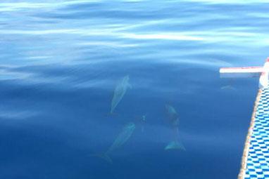 イルカの大群に遭遇!