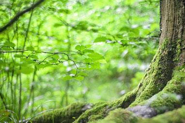 Baum mit starken Wurzeln