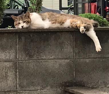 まったりと憩うネコ