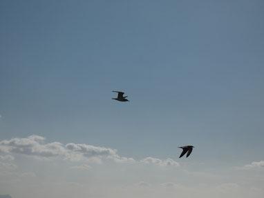 ジョナサン達も風が強すぎて低空飛行でした。