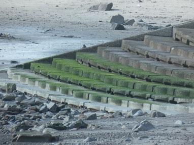 ぬれている時のこの海苔ご注意下さい。かなり滑りますよ~