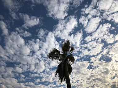 今日も雲が美味しそう♪