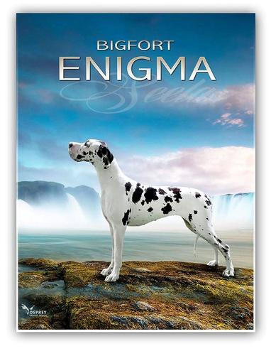 Bigfort Enigma