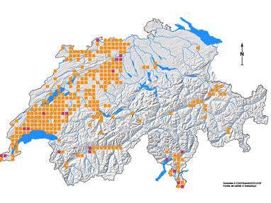 Geburtshelferkröte Rheinfelden Verbreitungskarte Stand 1995