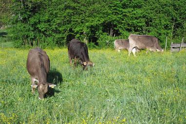 Rindfleisch, Braunvieh, Weidehaltung