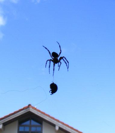 Wenn ihr bei den großen Konzernen einkauft, unterstützt ihr, dass diese Konzerne die mittleren und kleinen Betriebe fressen - wie diese Spinne den Käfer