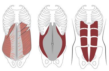1) OI und OE 2) M.Transverus Abdominis 3) M. Rektus Abdominis
