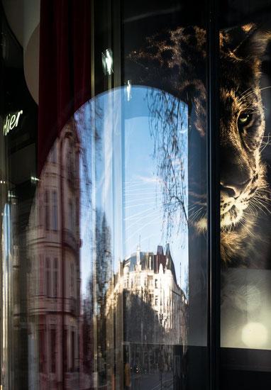 Panthera 2015 Berlin © Arina Dähnick