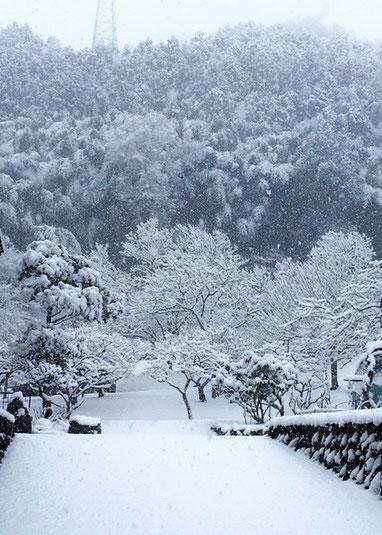 これも先日の雪の時に家のすぐ近くで撮った写真です。もう溶けましたが冬期オリンピックの話題にあわせて。。