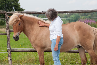 Fortbildung, Pferdeausbildung, mit Pferden Arbeiten, Coachingausbildung mit Pferden, Fortbildung mit Pferden