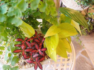 おしゃれな観葉植物の寄せ植え