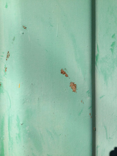 気根は跡が非常に残りやすく、壁等に残ってしまう場合が多い