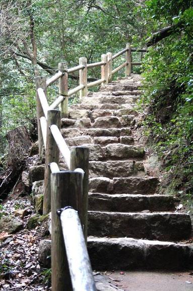 les innombrables marches du parcours Momiji