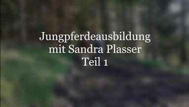 Jungpferdeausbildung mit Sandra Plasser