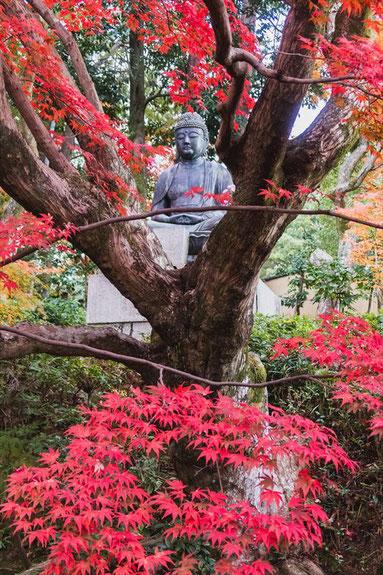 京都栄摂院の釈迦座像と紅葉