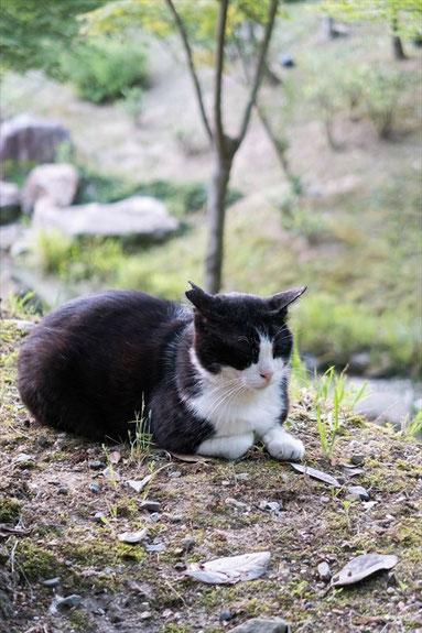伏見稲荷にいた猫さん