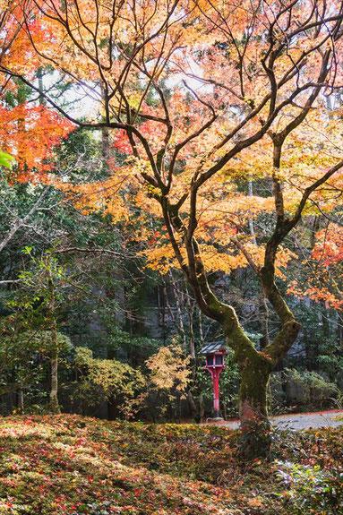 京都常照寺の紅葉
