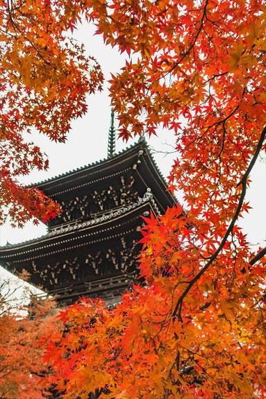 京都真如堂の三重塔と紅葉