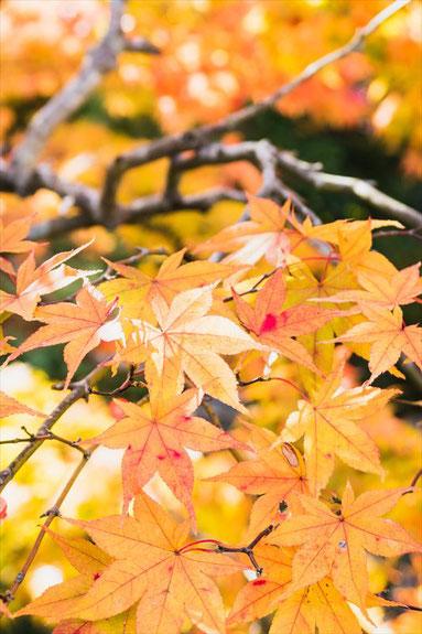 嵐山大河内山荘の紅葉