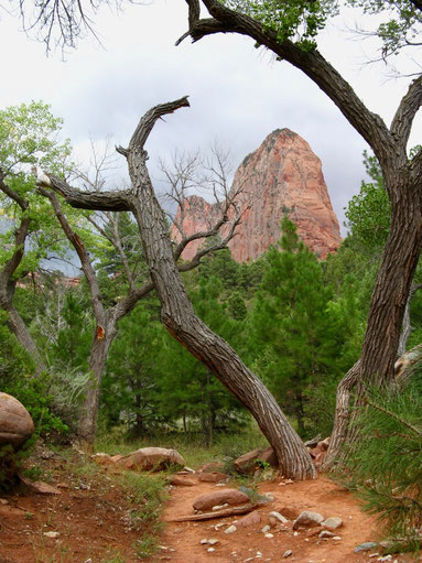 Zion, Kolob Canyons, Tailor Creek Trail