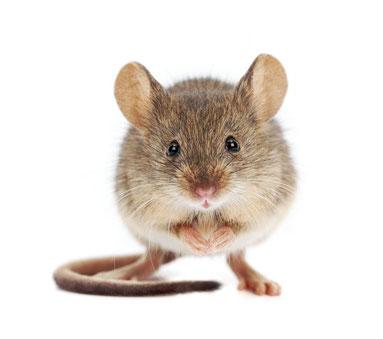 Auch alle möglichen Zoo-und Heimtiere können Parasitenträger sein und über Kotproben gezielt behandelt werden.