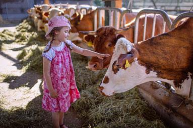 Kind streichelt Kuh am Kopf beim Fressgitter