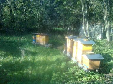 Bienenstand in St.Oswald