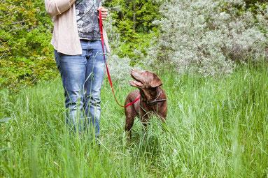 Hund an der Leine mit Besitzer beim Aufmerksamkeit-Training