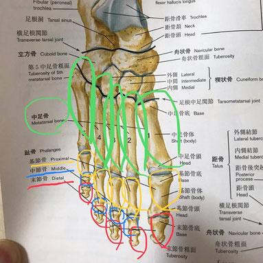 小牧 鍼灸 鍼治療 自律神経 腰痛 頭痛 肩こり