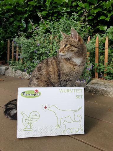Katzenmädchen Hermine  Tiershop.de  Wurmtest