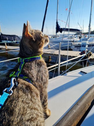 Das Segelboot wird Fibis zweites Revier