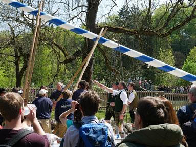 Maibaumaufstellen im Tierpark Hellabrunn München