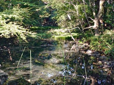 かいぼり前の大池