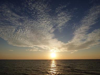 夕日の上のうろこ雲が羊みたいにモコモコしてた。