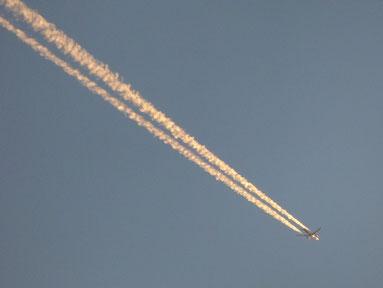 飛行機雲も夕日色に染まってました。